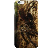 Arachnid in Darkness iPhone Case/Skin