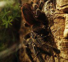 Arachnid in Darkness by Matthew Ellerington