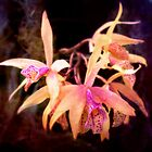 Flower - Orchid - Laelia - Midnight Passion by Mike  Savad