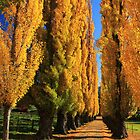 Poplars at Wandiligong by Charles Kosina