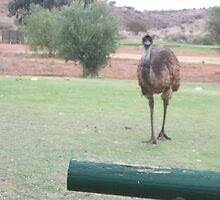 Emu by James Dart Golf Club B H by Heather Dart