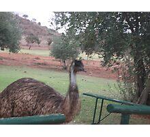 Emu by James Dart Broken Hill  Photographic Print