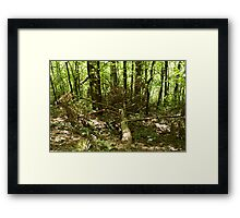 old-growth forest Framed Print