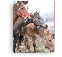 Equine Fluffy Metal Print