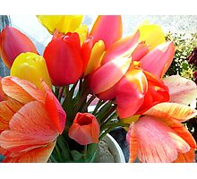 Spring bouquet of tulips Photographic Print