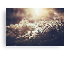 Hint of winter Canvas Print