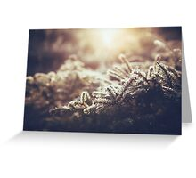 Hint of winter Greeting Card