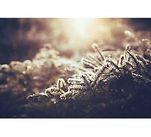 Hint of winter Photographic Print