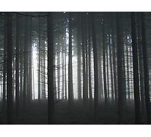 Murky Wood Photographic Print