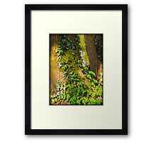 Ivy on a Tree Framed Print