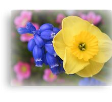Tiny Daffodil Canvas Print