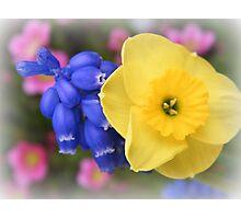 Tiny Daffodil Photographic Print