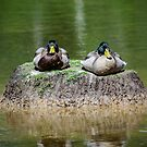 Just the two of us on an Island  by DebbyScott