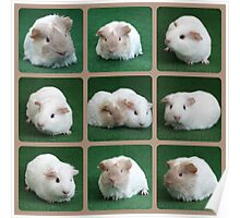 Guinea Pig Collage Poster