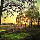 Ravenshead evening by jrsisson