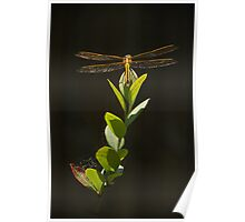 Dragonfly Resting on Blueberry Bush Poster