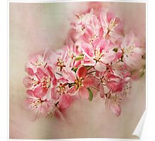 appleblossom Poster