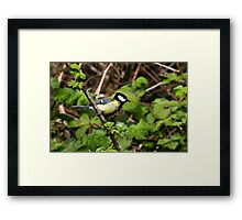 Great Tit Framed Print
