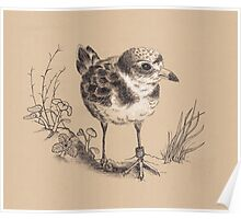 Piping Plover and Sea Beach Amaranth Poster