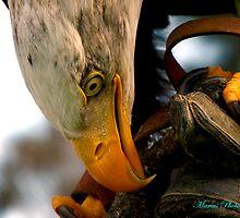 Bird of Prey by mariusvic