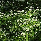 Wild Garlic by Artberry