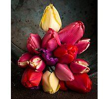 Fresh Spring Tulips Still Life Photographic Print