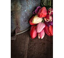 Fresh Cut Spring Tulips Photographic Print