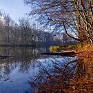 Late Autumn Mood by Keld Bach