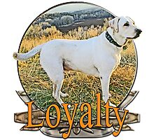 White lab loyalty  Photographic Print