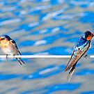 Welcome swallows. by JeanNieman