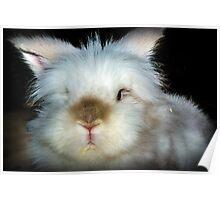 Harvey the lion head rabbit Poster