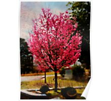Cherry Blossom in Oils Poster