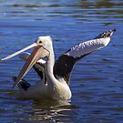 Please to see  you  Happy Pelican by Kym Bradley