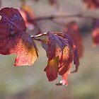 Autumn Leaves by Deborah McGrath