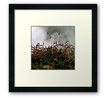 Miniscule World Framed Print