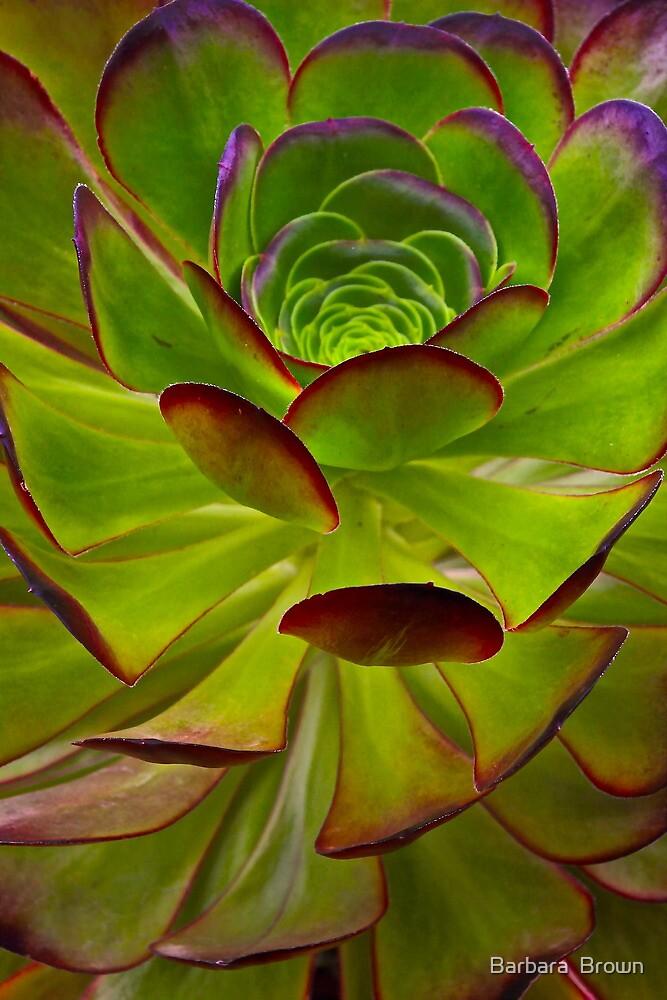 Nature Patterns by Barbara  Brown