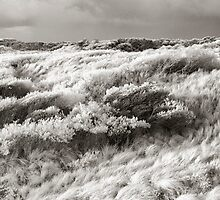 Ocean Beach by Mel Brackstone