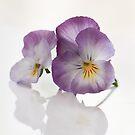 Viola by Nicole W.