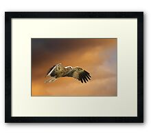In The Zone Framed Print
