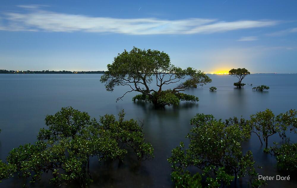 Cleveland Mangroves by Peter Doré