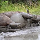 Fun in the mud! by jozi1