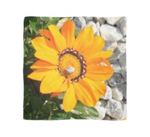 Bright Orange Gazania Flower with Snail Scarf
