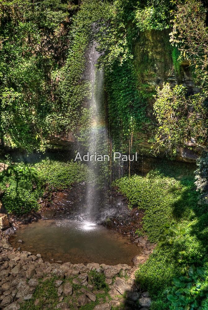 Crystal Shower Falls, Dorrigo NP, NSW by Adrian Paul