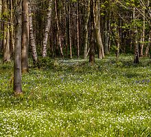 Woodland Carpet by Paul Richards