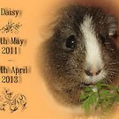 Daisy! 4th May 2011 - 29th April 2013 by Michaela1991