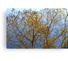 An Autumn to Remember Canvas Print