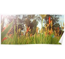 Rise of the Heliconia Poster