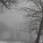 Fog and old trees by UpNorthPhoto
