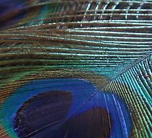 Peacock feather by Nimi
