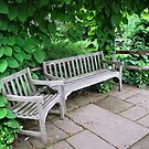 Bench at Holden Arboretum by Sheri Nye